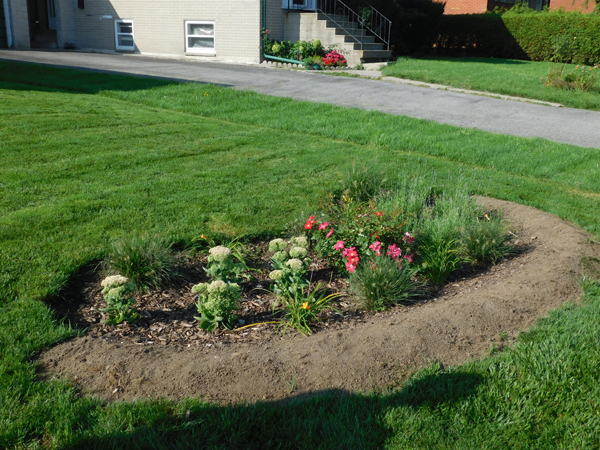 Residential rain garden - after