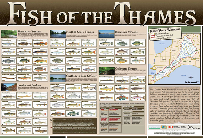 Fish of the Thames poster