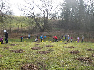 Switzer property - 620 trees planted by 220 students